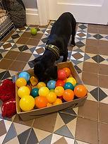Bolton dog walker. Puppy visits