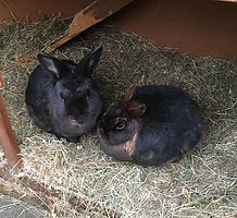 Pet sitter in Bolton. Rabbit care. Holiday care