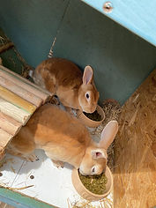 Bolton pet sitter. Rabbit care. Pet sitting. Small animal care. Bolton pop in visits