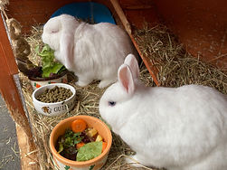 Bolton pet sitter. Pet sitting. Small animal care. Rabbit care. Pop in visits, Bolton