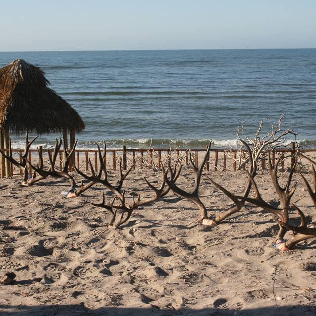 Sheldoni deer racks at the beach at indian reservation town