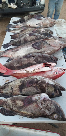 Groupers fished at Indian Reservation
