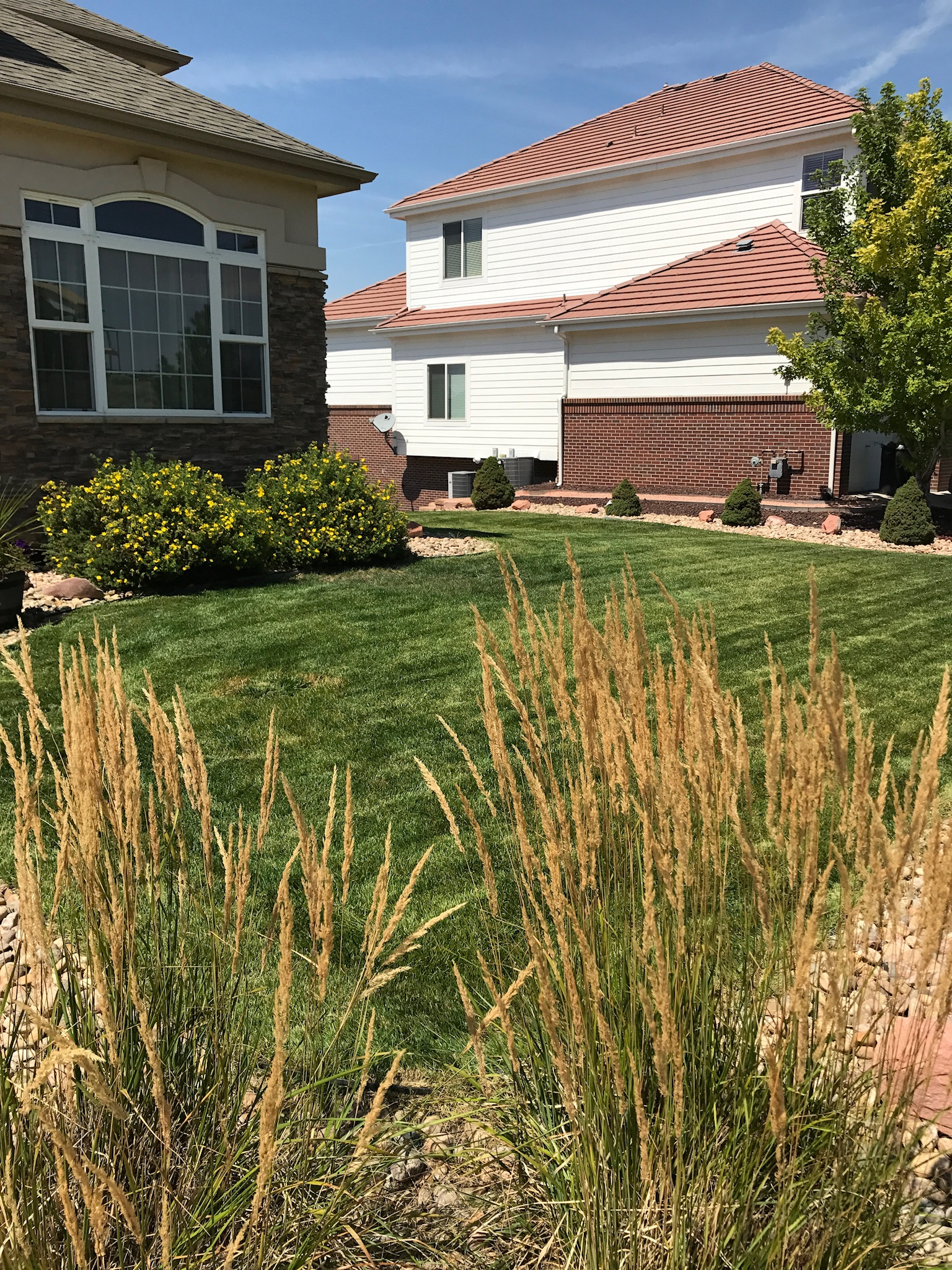 Tall grasses for curb appeal