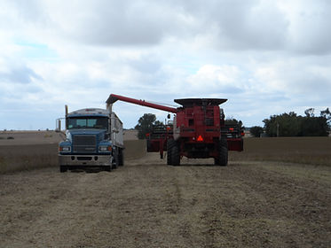 Black Dirt land sales and land management