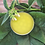Thumbnail: Green Earth Salve