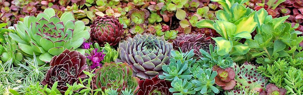 Succulent garden Bon Terra