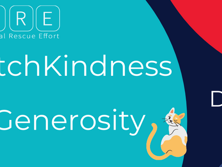 This Giving Tuesday, Catch Kindness and Spread Generosity