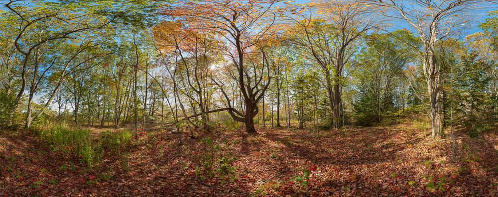 Autumn Woods 20171022