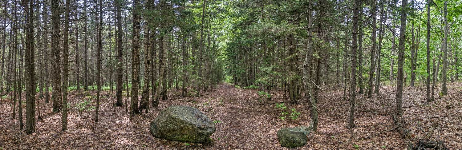 Chandlers Cove Wooded Path 20160607