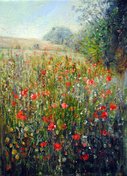 Poppies on the Mount Guildford by Jane Allison