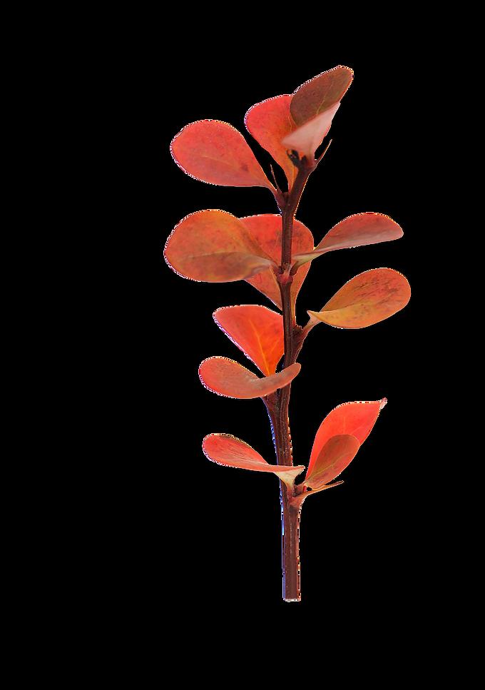 Flores_tons rosa-laraja.png
