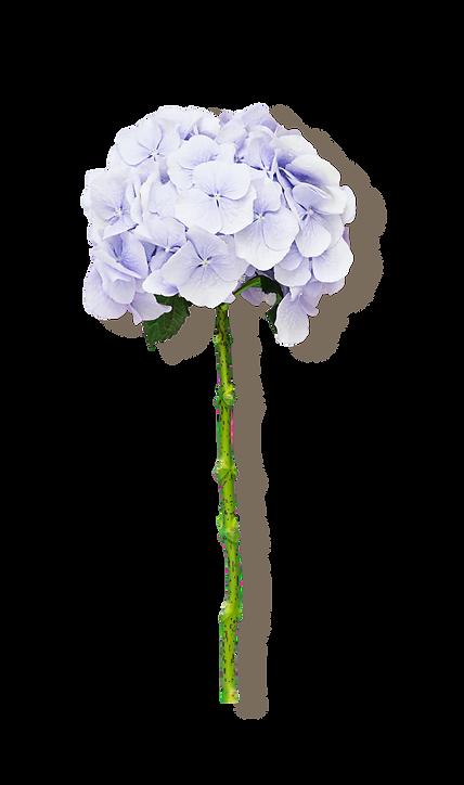 Flor lilás.png