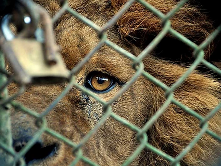 Is it time to transform zoos?