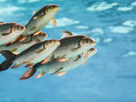 Editorial: ¿Bienestar para los animales acuáticos?