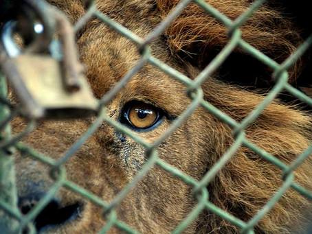 ¿Llegó el momento de transformar los zoológicos?