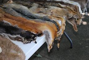 animal-skins-454357_1920.jpg