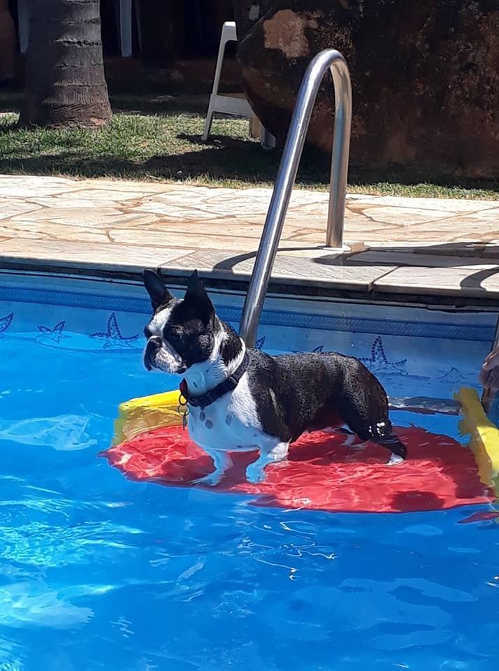 plataforma save dog - saída da piscina para cachorro