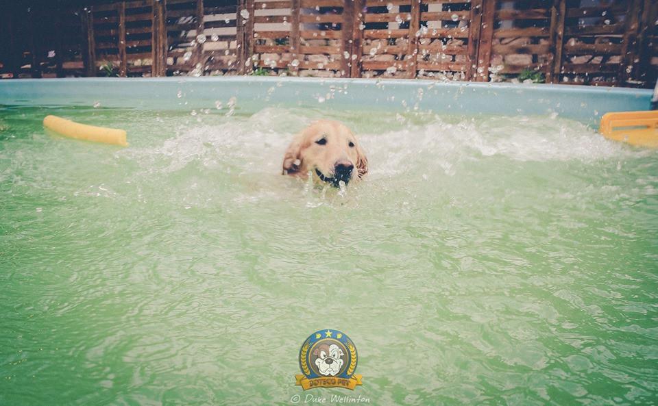 foto: Duke Wellinton - Boteco Pet I Curitiba