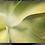 Thumbnail: Sukkulent (grønn) 30x40