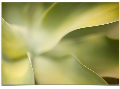 Sukkulent (grønn) 30x40