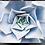 Thumbnail: Sukkulent (blå) 30x40