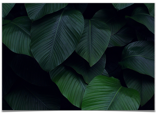 Mørke blader 30x40