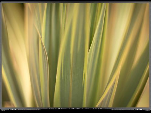 Gressplante 30x40