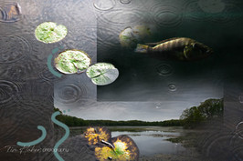 Lily pads collage-6