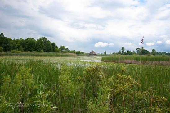 Across the marsh
