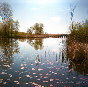 Young lily pads toward the Light