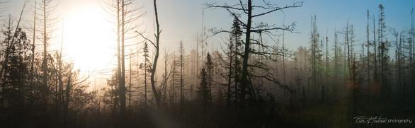 Soft fall sunrise