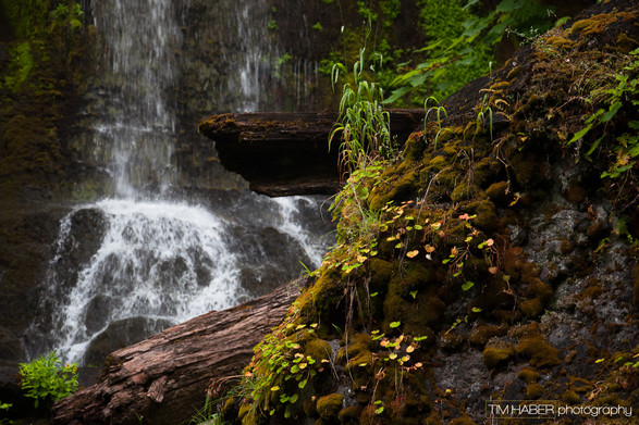 Foliage along the falls