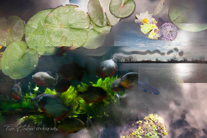 Lily pads collage-1