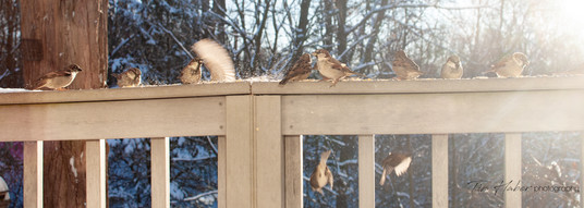 Sparrows in the Light
