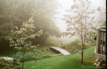 Morning fog in the yard
