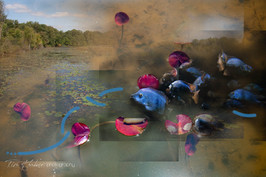 Lily pads collage-3