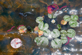 Lily pads collage-16