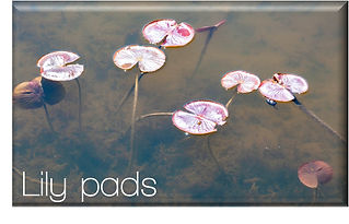 Button - Lily pads.jpg