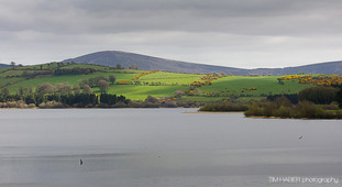 Irish green under gray