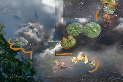 Lily pads collage-2