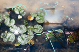 Lily pads collage-4