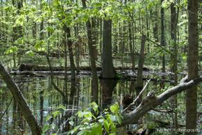 Water in the deep woods