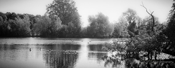 The trees at the pond