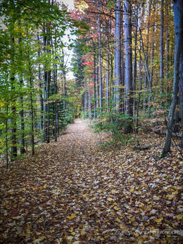 The fall's leafy blanket