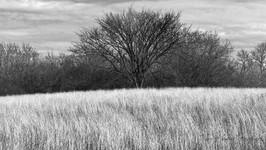 Beyond the tall grass