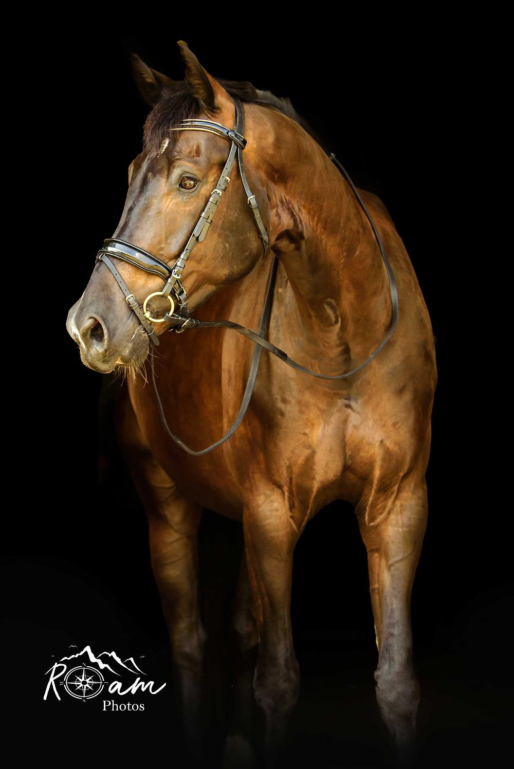 Pretty bay horse