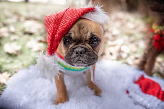 bellachristmas.jpg