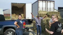 More hay to CO