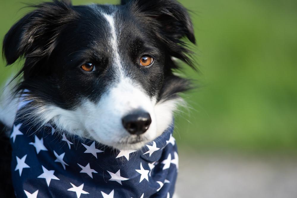 Dog Pittsburgh Dog photographer