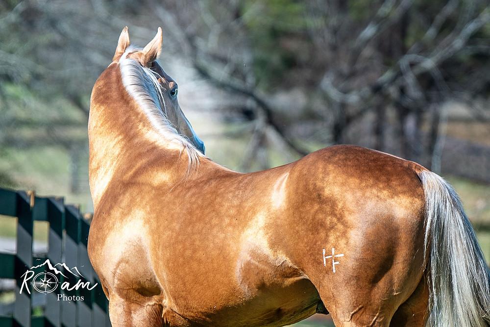 equine photographer pittsburgh